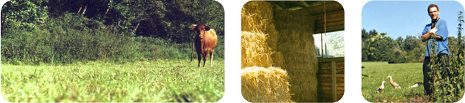 Landwirtschaft und Handwerk
